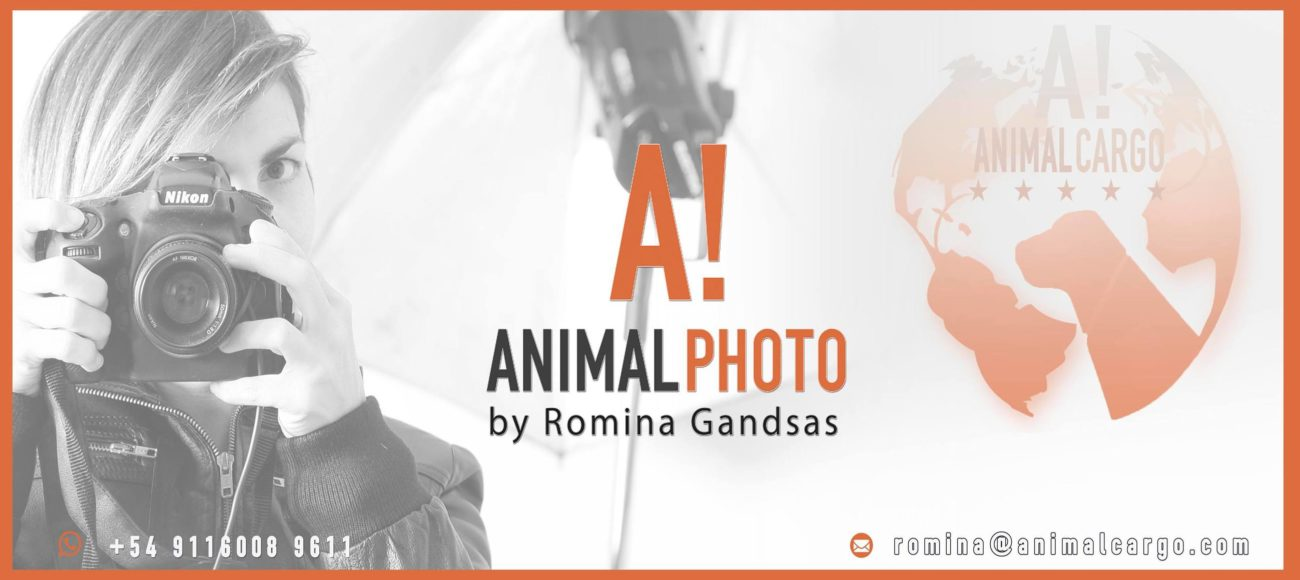 Animal Photo by Romina Gandsas - Professinal Photgraphy services & Design - Animal Show Magazine