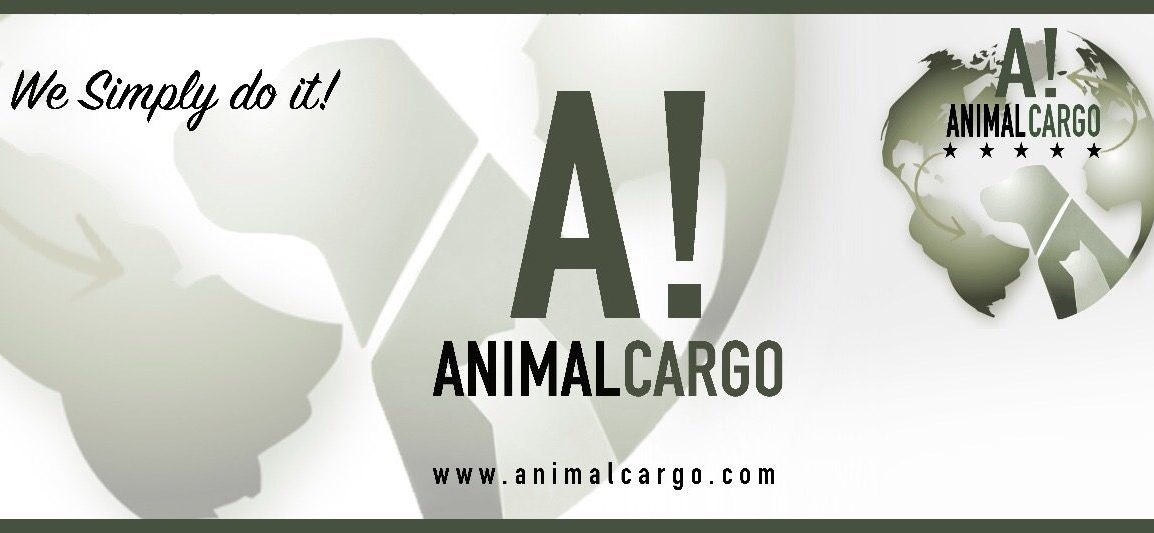 pet transport, pet relocation, traslado de mascotas, transporte de mascotas